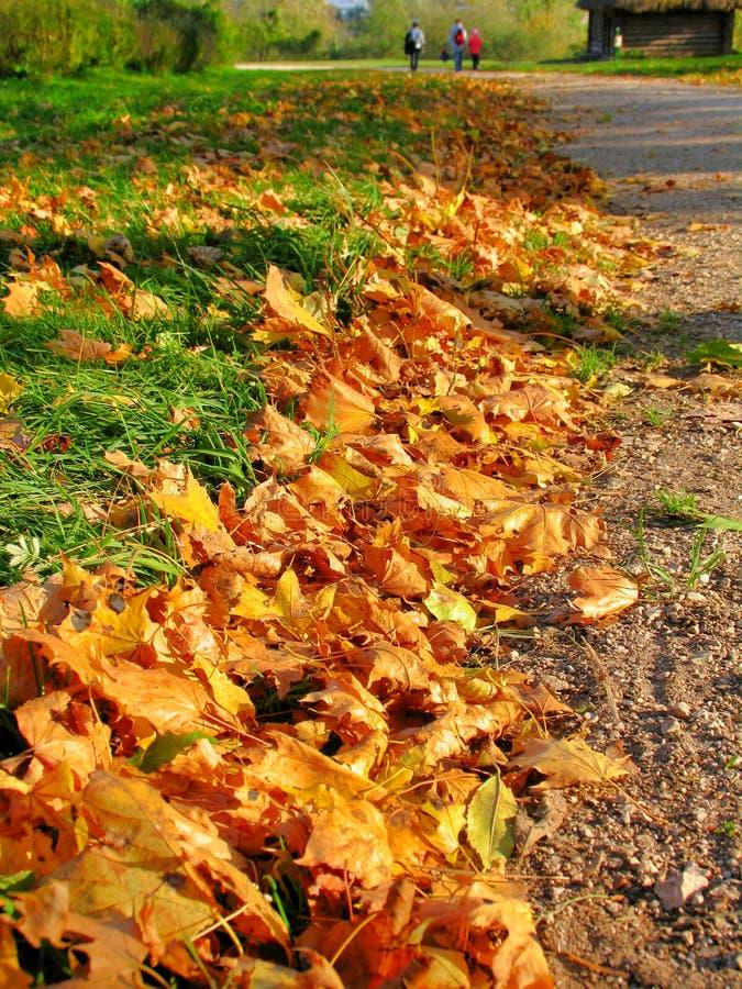 De herfstweg door esdoornbladeren dat wordt ontworpen royalty-vrije stock afbeelding