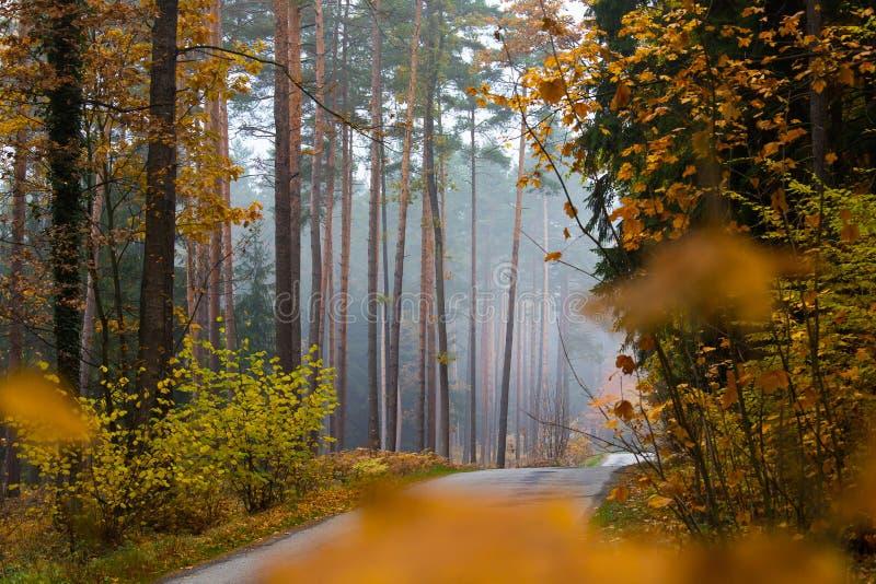 De herfstweg in het bos royalty-vrije stock foto's