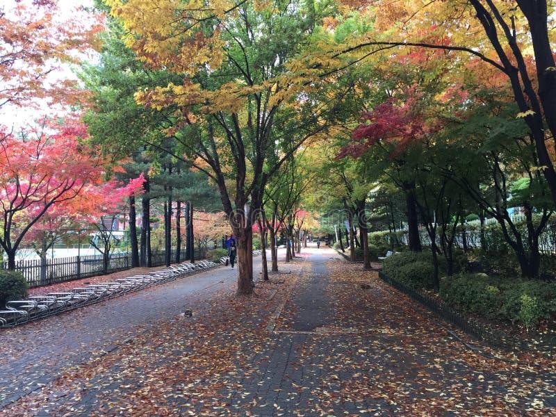 De herfstweg met veranderende kleuren stock foto