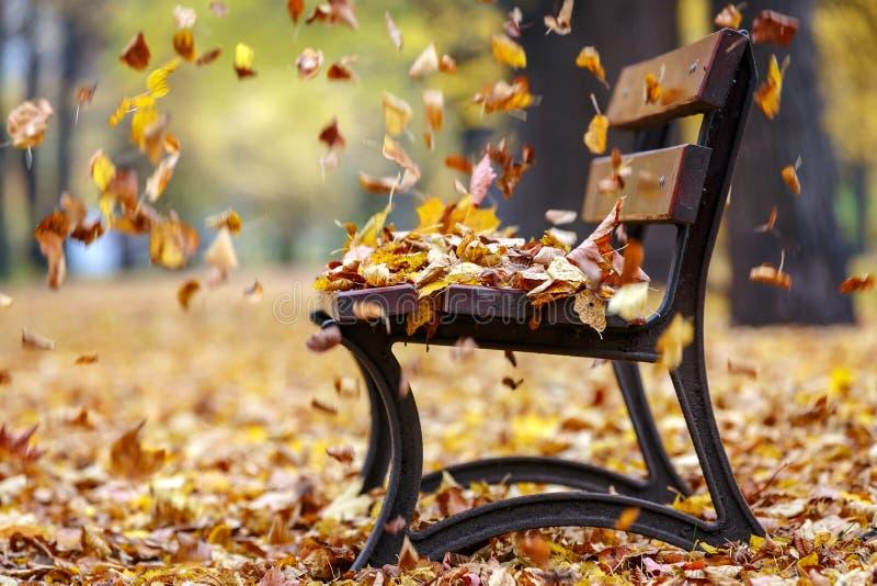 De herfstwind in het park stock afbeeldingen