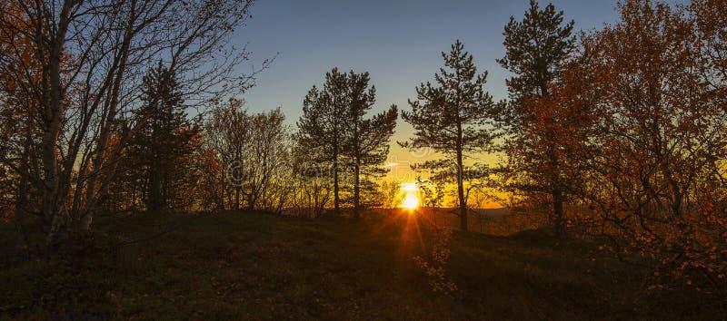 De herfstzonsondergang in het bos stock fotografie