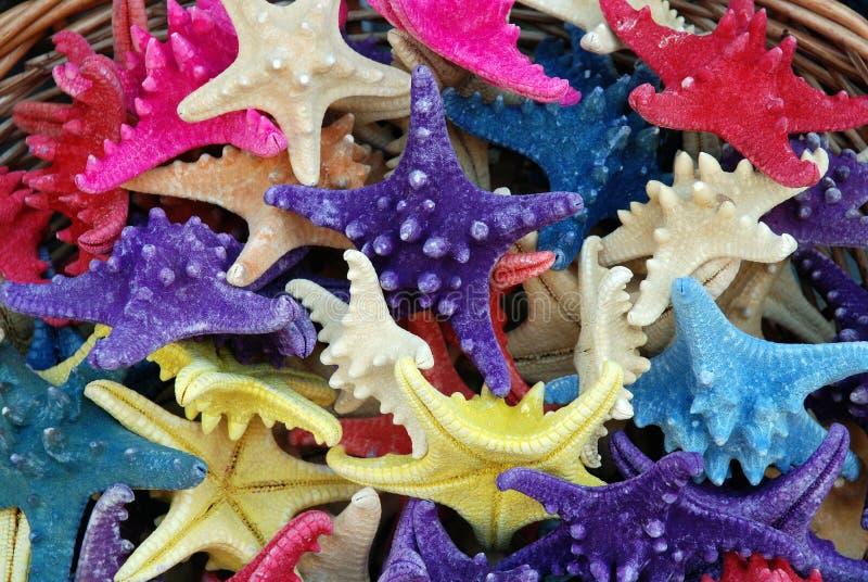 De Herinneringen van de Zeester van Colorfull stock foto