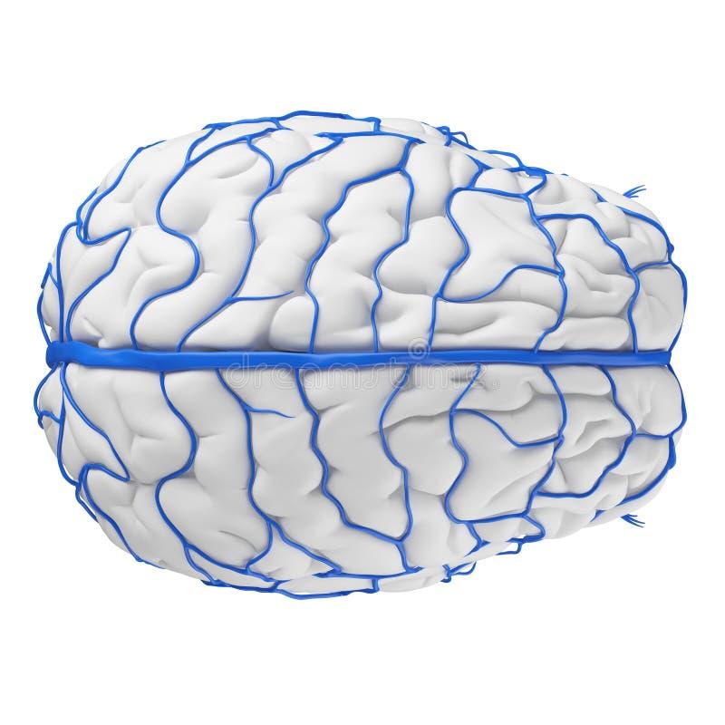 De hersenenaders royalty-vrije illustratie