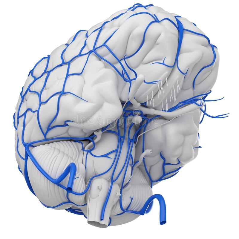 De hersenenaders stock illustratie