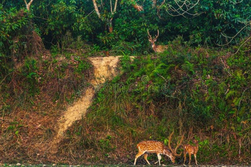 De herten kwamen aan de bar in een wildernis stock afbeelding