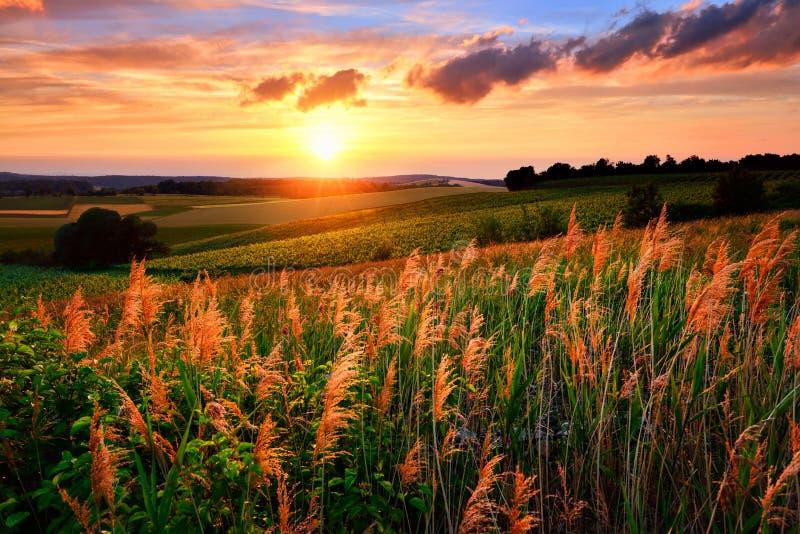 De het plaatsen zon schildert het hemel en vegetatierood royalty-vrije stock afbeelding