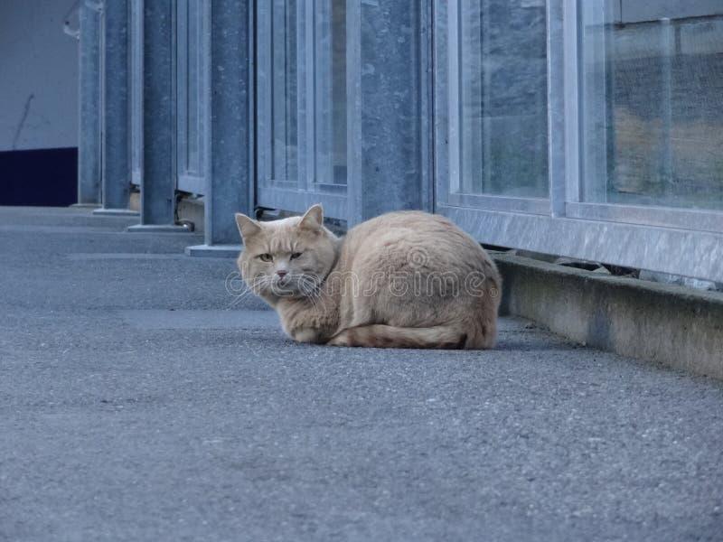 De het stellen kat royalty-vrije stock fotografie