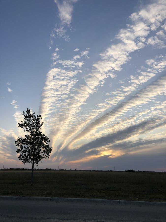 De het Toenemen wolken van de boom stock fotografie