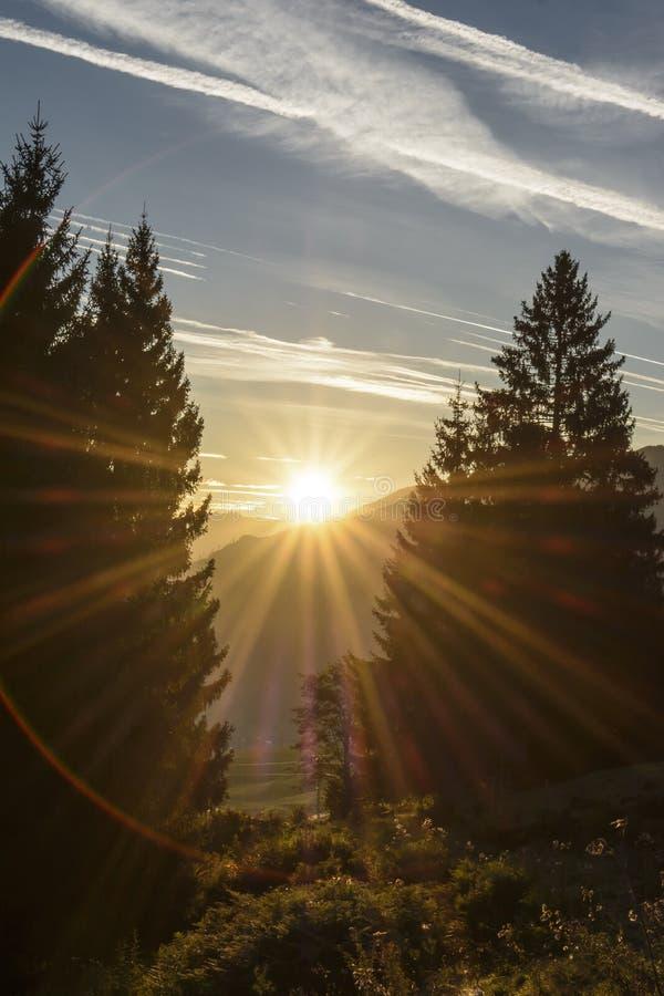 de het toenemen zon tussen pijnboom twee stock fotografie