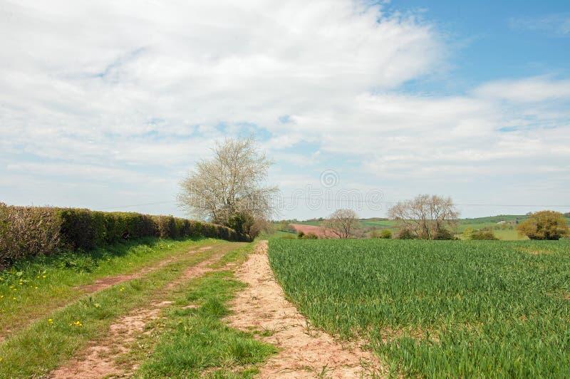 De de de het zomerlandschap, gebieden, hagen en cumulus betrekken in het Britse platteland stock fotografie