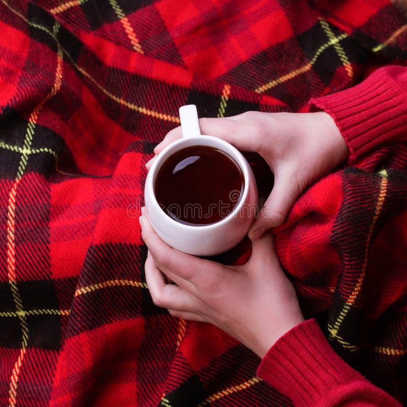 De hete mok van thee het verwarmen vrouw ` s dient rode wollen sweater in royalty-vrije stock fotografie