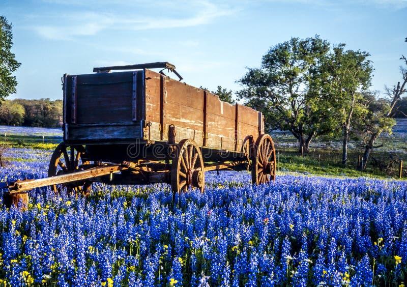 De heuvelland van Texas stock afbeeldingen