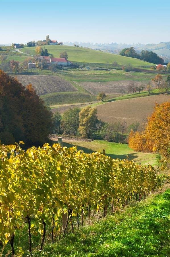 De heuvels en wineyards van weiden in Robaje - Kroatië royalty-vrije stock foto's