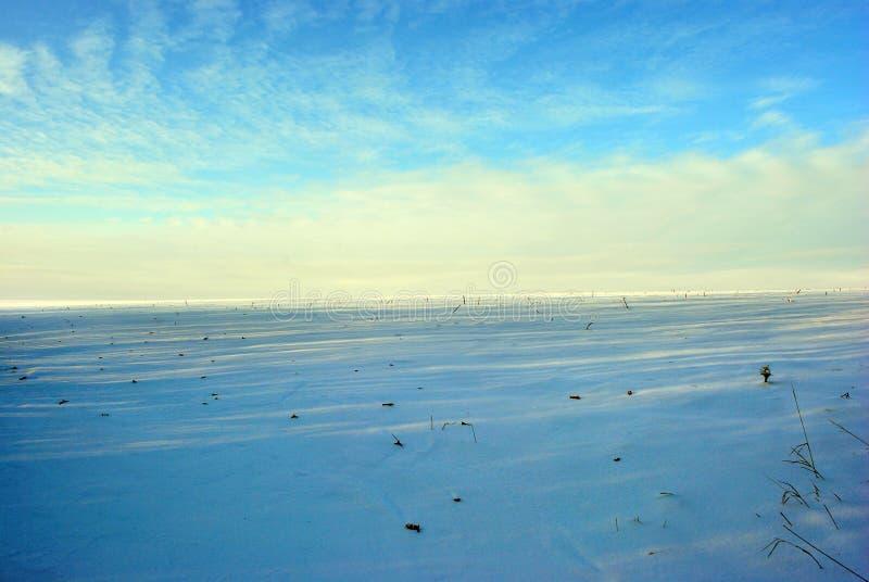 De heuvels met sneeuw, gebied met zonnebloem worden behandeld snijden stammen, de winterlandschap, heldere blauw-gouden bewolkte  royalty-vrije stock afbeelding