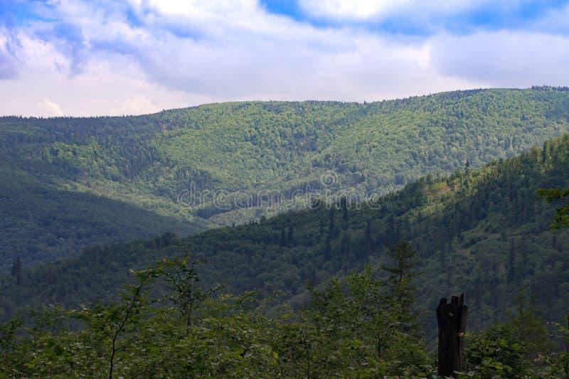 De heuvels in Poolse bergen, u kunnen het groeien lange bomen en blauwe hemel zien royalty-vrije stock foto's