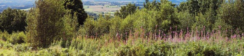 De heuvels van Clent royalty-vrije stock foto's