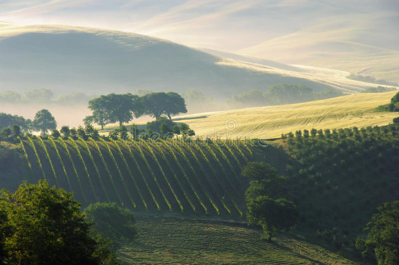 De heuvels van Toscanië stock foto's