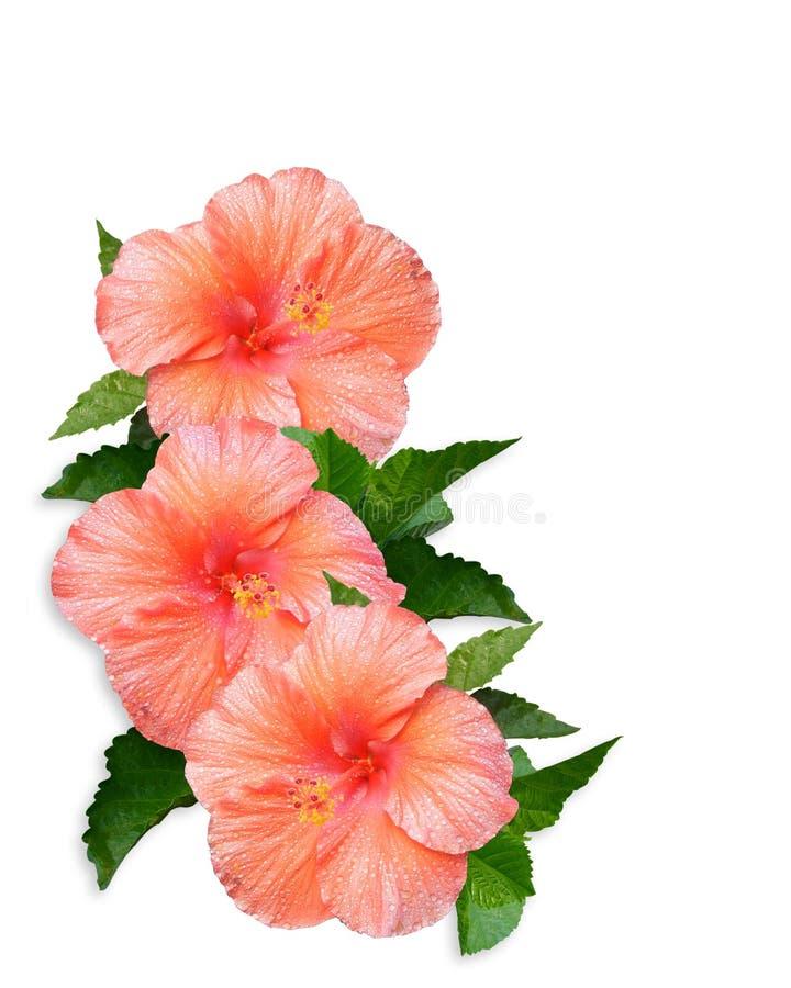 De hibiscus bloeit Grens   stock illustratie