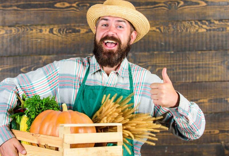 De hoed van het landbouwers hipster stro levert verse groenten De slijtageschort die van de mensen vrolijke gebaarde landbouwer g stock afbeeldingen