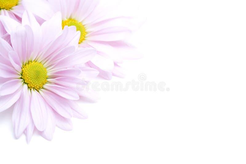 De hoek van bloemen royalty-vrije stock fotografie