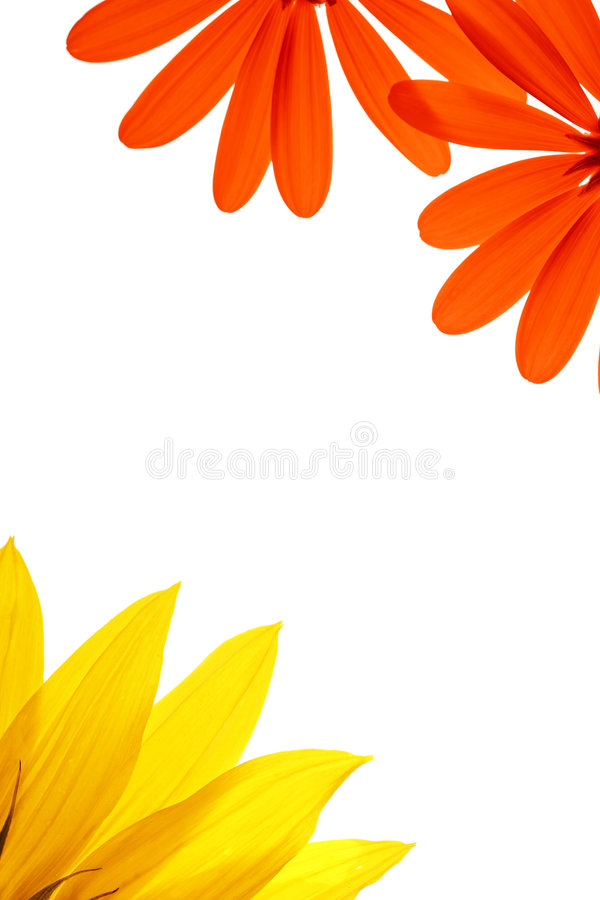 De hoeken van de bloem stock afbeeldingen