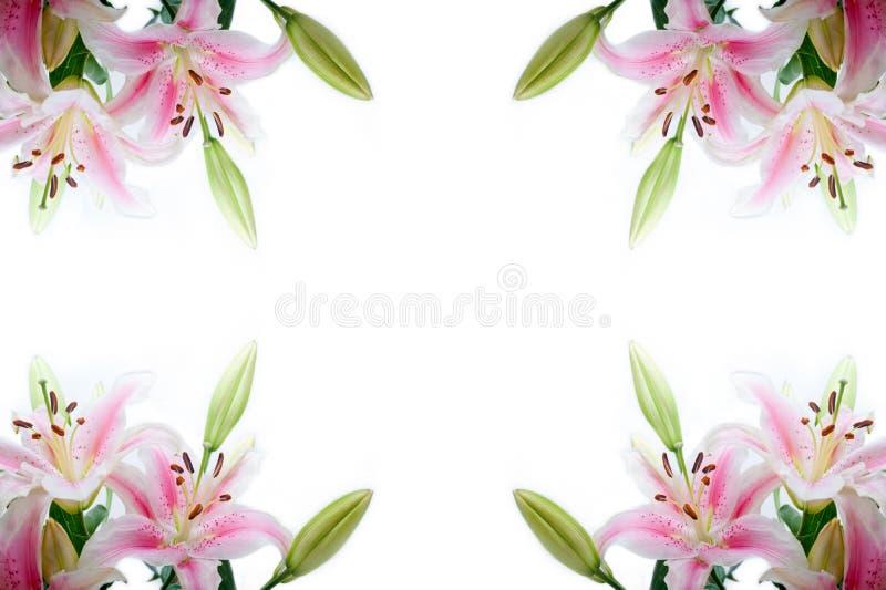 De hoekkader van leliebloemen royalty-vrije stock afbeelding