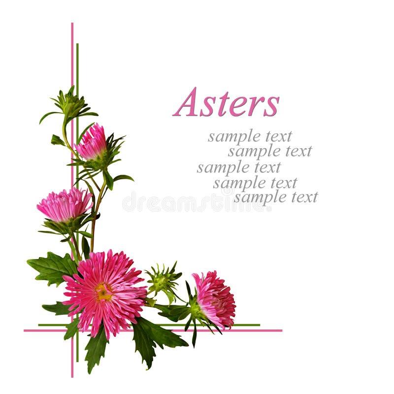 De hoeksamenstelling van asterbloemen stock illustratie