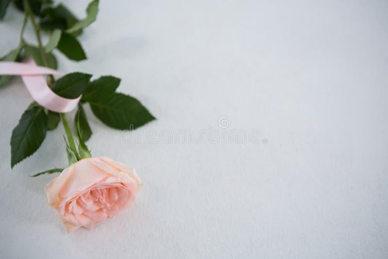 De hoge hoekmening van roze de Voorlichtingslint van Borstkanker en nam toe stock fotografie