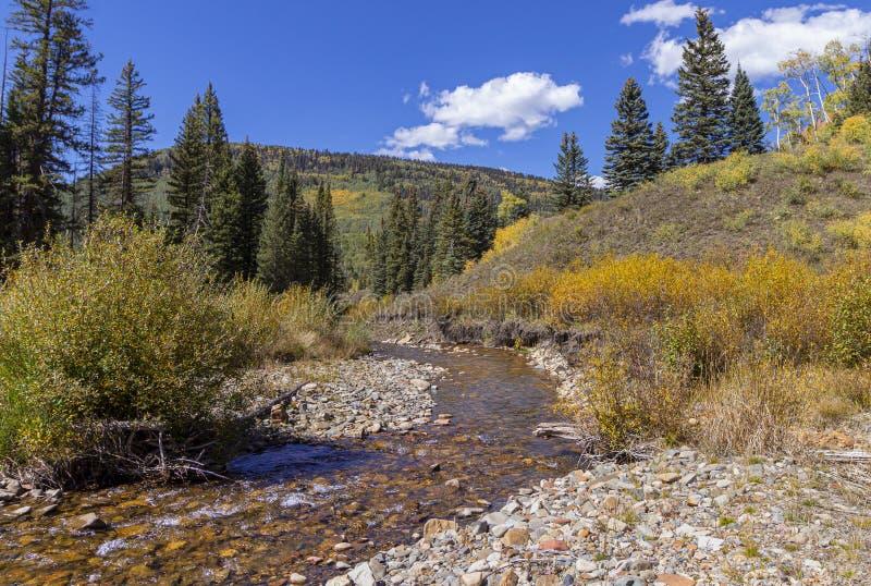 De hoge Stroom van de Bergforel dichtbij Rico Colorado In de Daling stock foto's