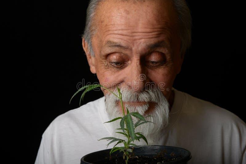De hogere mens kweekt marihuana stock afbeelding