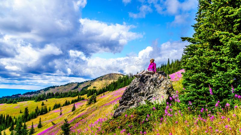 De hogere vrouwenzitting op een grote rots in hoge alpien omringd door roze Wilgeroosje bloeit royalty-vrije stock foto