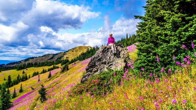 De hogere vrouwenzitting op een grote rots in hoge alpien omringd door roze Wilgeroosje bloeit stock foto