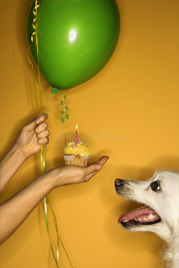 De holding van de hand cupcake met hond. royalty-vrije stock afbeeldingen