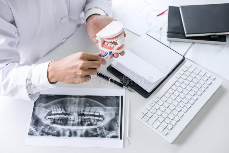 De holding van de tandartshand van kaakmodel van tanden en schoonmaken tand met tandenborstel stock foto