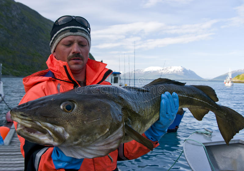 De holdingsKabeljauw van de visser royalty-vrije stock foto