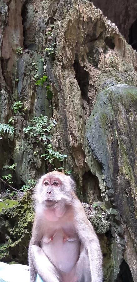 De Holen Maleisië van apenbatu royalty-vrije stock afbeelding