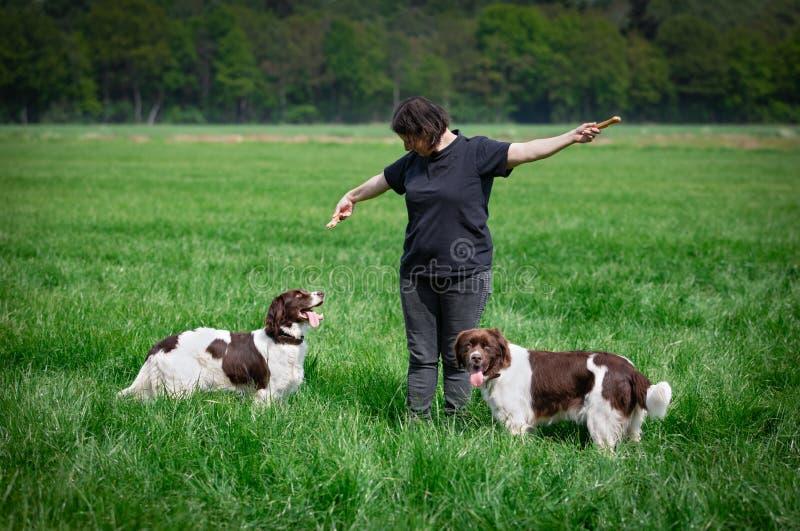 De hond bekijkt omhoog de vrouw van het het kauwenbeen omhoog houdt royalty-vrije stock foto's