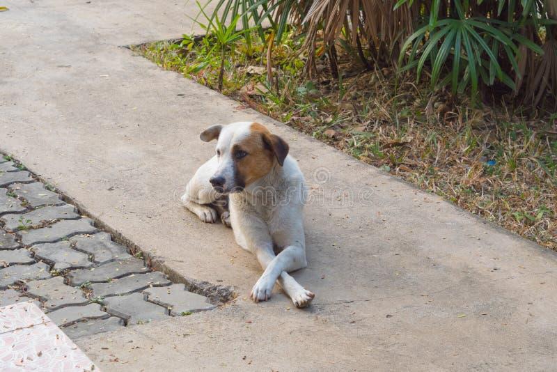 De hond bij het chef- bevel wordt gezeten dat Tussen de werkgever wachten om aan collega's te spreken royalty-vrije stock afbeelding