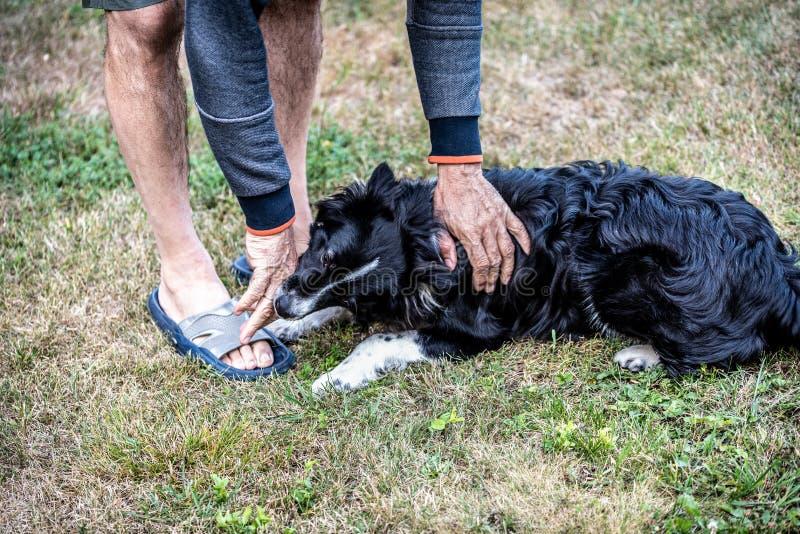De hond bijt de man hand Een mens die met een hond op een groen gazon spelen stock fotografie