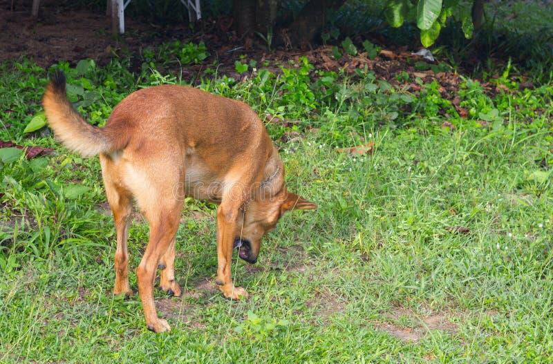 De hond braakt royalty-vrije stock foto