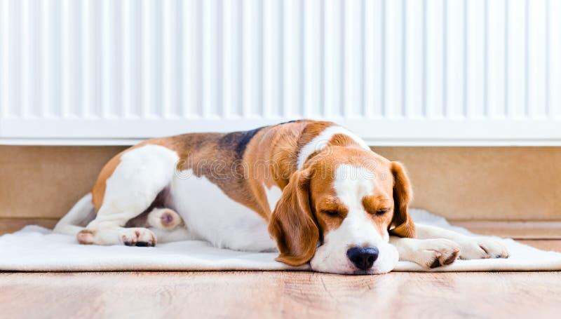 De hond dichtbij aan een warme radiator stock foto's