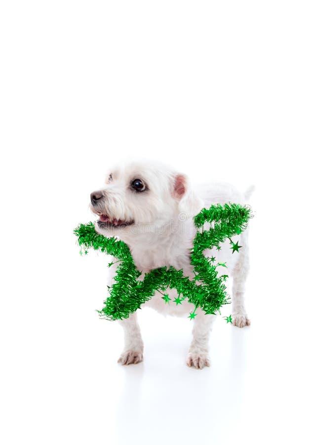De hond die van het puppy een groene klatergoudster draagt stock afbeelding