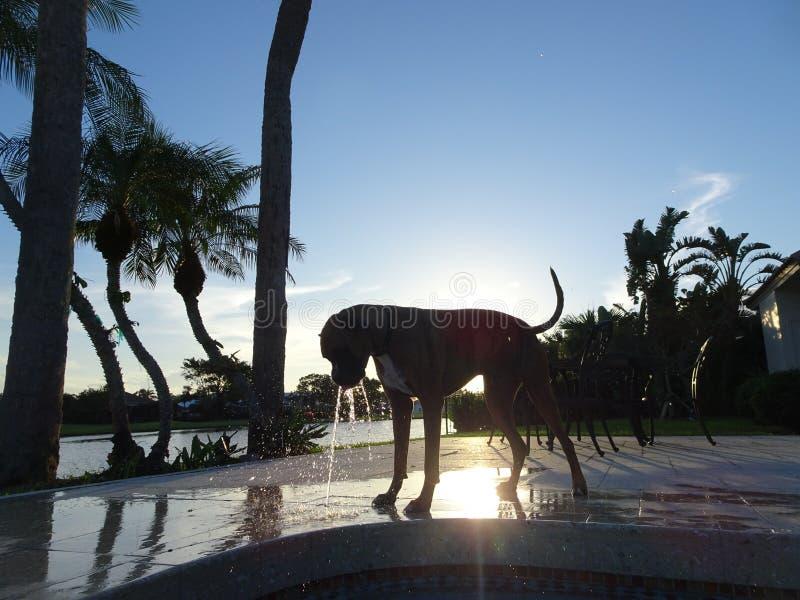 de hond drinkt en bespat het water van fontein royalty-vrije stock foto