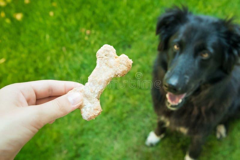 De hond eet koekjes royalty-vrije stock foto