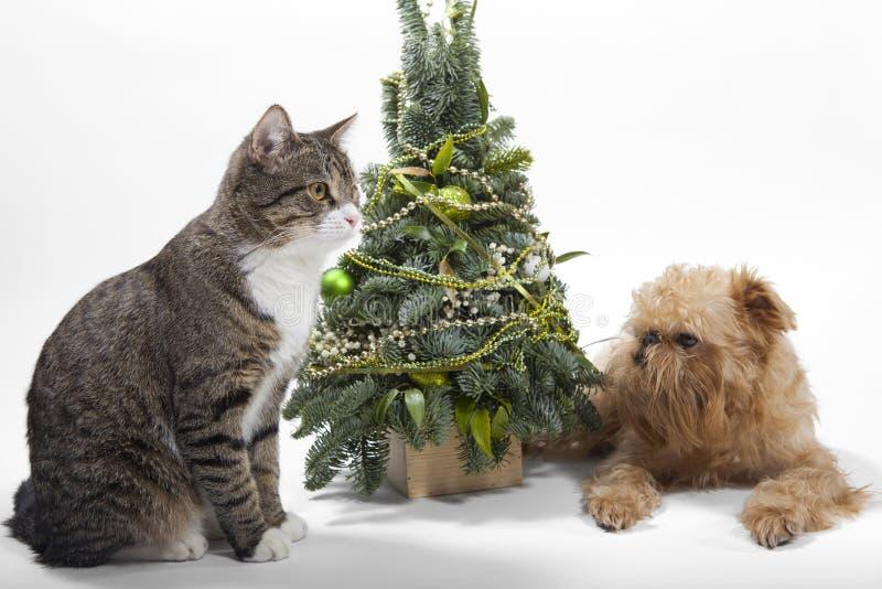 De hond en de kat liggen dichtbij de Kerstboom stock fotografie