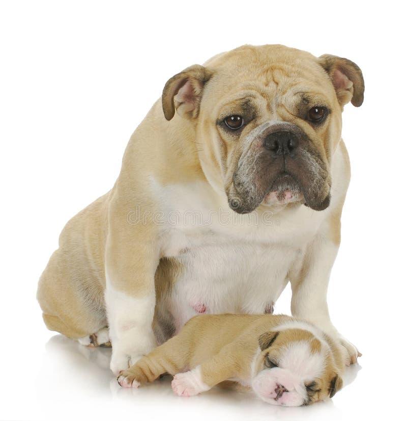 De hond en het puppy van de moeder stock foto