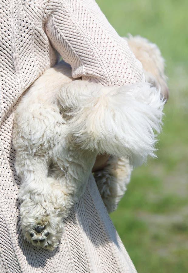 De hond en zijn eigenaar zijn de beste vrienden royalty-vrije stock foto