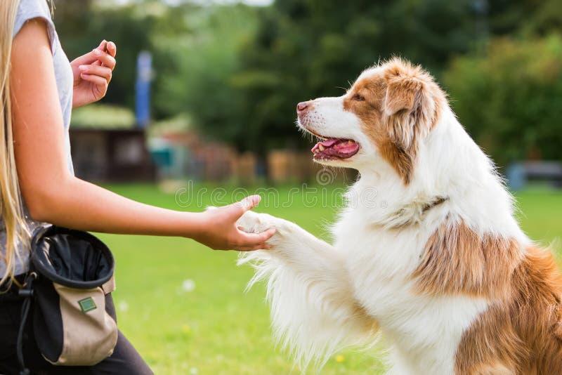De hond geeft een meisje de poot stock afbeeldingen