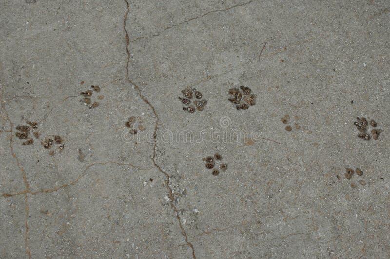 De hond handtastelijk wordt dierlijke sporen royalty-vrije stock fotografie