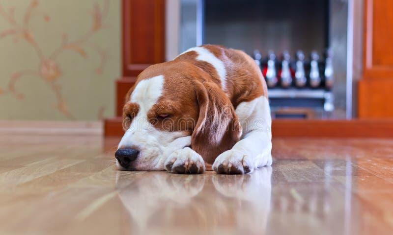 De hond heeft dichtbij rust aan een open haard royalty-vrije stock foto's